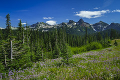The View From Paradise (RobertCross1 (off and on)) Tags: a7rii alpha cascaderange cascades emount fe1635mmf4zaoss ilce7rm2 mountrainier mtrainier mtrainiernationalpark pacificnorthwest sony wa washington bluesky clouds flowers forest fullframe landscape mirrorless mountains snow trees wildflowers