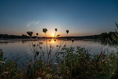 Sunset Dechsendorfer Weiher 2816.jpg (Peter Goll thx for +13.000.000 views) Tags: erlangen z6 nikon sunset dechsendorf nature dechsendorfweiher nikkor14124mm nikkor nikonz6 2019 natur sonnenuntergang bayern deutschland nikkor1424