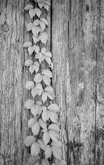 14_F102_20190914_025_JPEG 3000 (Domenico Cichetti) Tags: bustoarsizio leicam5 monocrome blackwhite bw blackandwhite bn selfdevelop selfdevelope studional street summicronc40mmf2 elmaritm28mmf28asph silver argentique analogicait analogico film