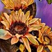 orange sunflowers......2019-09-24