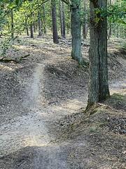 Grunewald_e-m10_1019229226 (Torben*) Tags: rawtherapee olympusomdem10 olympusm25mmf18 berlin grunewald wald forest trail pfad te