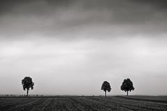 Drei Bäume (StefanB) Tags: 2019 1235mm tree germany deutschland treescape ries schwaben em5 bäume baum