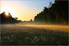 Morgens auf der Wiese (der bischheimer) Tags: sonnenaufgang sunrise spreewald wiese dunst morgennebel canon lausitz derbischheimer