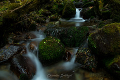 Through Mosses and Rocks (ChirantanB) Tags: slow shutter long exposure water stream river milky himalayas india wallpaper landscape