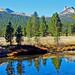 Tuolumne Meadow and River, Yosemite 2018