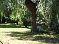 Autum Shades (catrionatv) Tags: hampshire winchester wharfmill itchennavigationcanal millstream railings grass lawn willowtrees fence bridge shadows