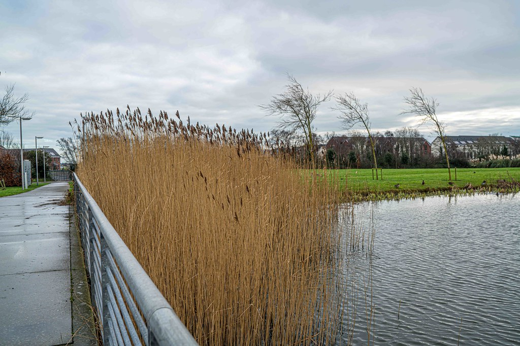 FATHER COLLIN'S PARK IS THE FIRST SUSTAINABLE PARK IN IRELAND [PHOTOGRAPHED IN JANUARY 2016]-156304
