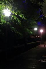 Chat réverbérant... (Tonton Gilles) Tags: alençon normandie réverbères lampadaires chat photo de nuit scène rue vert orange violet