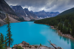 Moraine lake (Robert Grove 2) Tags: moraine lake view log blue water mountains canada banff park