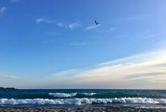 great lakes (helloflower!) Tags: toronto ontario beach sand waves greatlakes lakeontario ward'sisland thegreatdarkwater