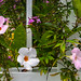 Pineland Farm Flowers