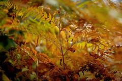 es wird Herbst (.rog3r1) Tags: autumn sonne leicasl summilux50mmf14 wald forest sun herbst