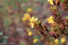Sérénité de mes après-midis (LUMEN SCRIPT) Tags: park plant texture macro nature dream dof poetry bokeh yellow flower