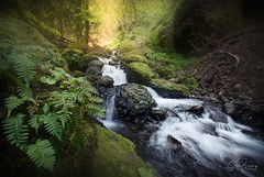 Emerald Falls II (sberkley123) Tags: emeraldfalls summer oregon cascadelocks waterfalls water longexposure z7 columbiarivergorge usa gortoncreek 1424mm nikon