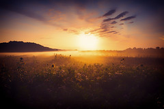 Good Mornings start like this  IV (der_peste (on/off)) Tags: sunrise sunset mist fog sunflower field nature landscape sky clouds cloudporn sunlight sun backlight orange violet blue tones mood moody atmosphere