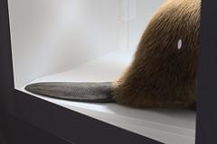 Naturkundemuseum_e-m10_1011073503 (Torben*) Tags: rawtherapee olympusomdem10 olympusm25mmf18 berlin naturkundemuseum berlinmitte tail schwanz