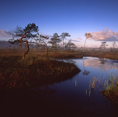 Morning in the bog (Tomas Ruginis) Tags: landscape landscapephotography bog sky lake tree morning island water bronica velvia mediumformat film fujifilm square summer 66 nature wildnature lithuania lietuva peizažas