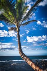 Palm Tree in Maui (Ken Mickel) Tags: beach coast hawaii kenmickelphotography landscape maui ocean outdoors paia roadtohana shore sky photography water unitedstatesofamerica