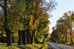 last day of the Summer... (green_lover (your COMMENTS are welcome!)) Tags: road trees landscape poland autumn fall vanishingpoint odc explore