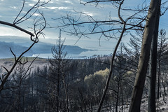 View after the Knysna fires 2017 (Esther Blaauwwiekel) Tags: knysna visitknysna gardenroute southafrica zuidafrika tuinroute knysnafires