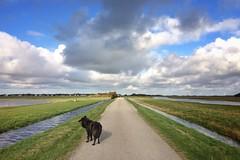 Totoro in de polder 🐺 (Jos Mecklenfeld) Tags: wandelen wandern hiking nederland niederlande netherlands noordholland callantsoog polder wolken clouds landschaft landscape landschap hond hund dog schäferhund herdershond herder shepherddog shepherd hollandseherder dutchshepherd totoro