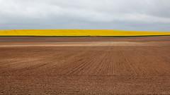 Travelling Spotlight (Bernd Walz) Tags: field fields soil space vastness nothingness emptiness void agriculture rural countryside transformedlandscape artificiallandscape fineart minimalistic minimalis