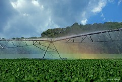 Spraying rainbows.... (Joe Hengel) Tags: sprayingrainbows georgetown georgetownde delaware de field farm lsd lowerslowerdelaware sussexcounty soybeans clouds cloudsbluesky trees rainbow irrigation watering summer summertime