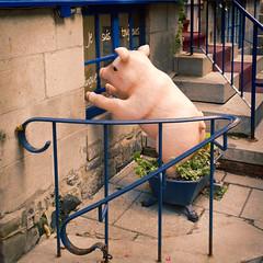 Je suis toujours dingue (joanne clifford) Tags: piglet pig watcher cochon cochondingue blue window windowwednesdays whimsical whimsy quebeccity vieuxquebec quebec