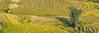 _29A1672-75.0919.A Lù.A Mú Sung.Bát Xát.Lào Cai (hoanglongphoto) Tags: asia asian vietnam northvietnam northernvietnam northeastvietnam landscape scenery vietnamlandscape vietnamscenery terraces terracedfields terracedfieldsinvietnam morning morningsunshine sunny sunlight harvest seasonharvest bambo canon canoneos5dsr đôngbắc làocai bátxát amúsung alù thunglũngalù ruộngbậcthang buổisáng nắng nắngsớm lúachín mùagặt ruộngbậcthangalù alùmùagặt alùmùalúachín phongcảnhalù panorama canonef500mmf4lisiiusm minimalisme