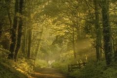 Last of the summer sun ? (mlloyd4075 ARPS) Tags: winsford england unitedkingdom whitegate cheshire woodland tress forest sunrise mist path gate green