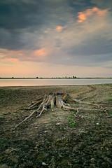 Raices (explore 281) (pascual 53) Tags: canon5ds 1635mm laguna ocaso raices tocon sequia largaexpo navarra ablitas nubes naturalezamuerta