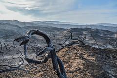 Buffalo bay 2017 (Esther Blaauwwiekel) Tags: knysna visitknysna gardenroute southafrica zuidafrika tuinroute knysnafires
