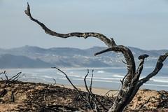 Buffalo Bay (Esther Blaauwwiekel) Tags: knysna visitknysna gardenroute southafrica zuidafrika tuinroute knysnafires