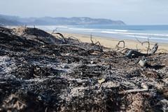 Buffalo Bay 2017, two days after the fires (Esther Blaauwwiekel) Tags: knysna visitknysna gardenroute southafrica zuidafrika tuinroute knysnafires