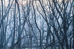 Rheenendal, a day after the Knysna fires (Esther Blaauwwiekel) Tags: knysna visitknysna gardenroute southafrica zuidafrika tuinroute knysnafires