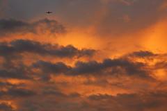 Evening sky (Teruhide Tomori) Tags: japan japon sky clouds plane airplane evening sunset nature shikoku ehime imabari 空 夕焼け 雲 飛行機 日本 今治 四国 日没 happyplanet asiafavorites