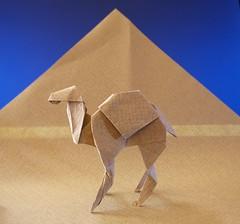 Dromedario - Gabriel Alvarez. (Stefano Borroni (Stia)) Tags: origami origamipaper origamicdo origamilove origamiart piegarelacarta arte folding foldingpaper papiroflexia carta animali natura wwf desert deserto paper art dromedario camel alvarez dromedary cdoitalia