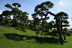 Shadows (Abhay Parvate) Tags: 浜離宮 hamarikyu 庭園 japanese garden pine 松 green nature shadows