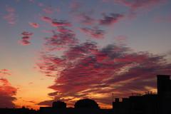 2019.09.16.02 NOISY-LE-GRAND - Lever du jour (alainmichot93 (Bonjour à tous - Hello everyone)) Tags: 2019 france europe ue unioneuropéenne frankreich francia frankrijk frança γαλλία франция îledefrance seinesaintdenis noisylegrand ciel sky cielo himmel hemel céu небо ουρανόσ nuage s clouds nubes nuvens wolken nuvole σύννεφα облака alainmichot