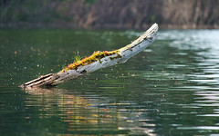 Far and away (Wicked Dark Photography) Tags: landscape wisconsin backlight kayaking lake log nature paddling summer water