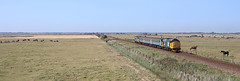 37424+37409 Acle Marshes (terry.eyres) Tags: 3742437409 aclemarshes shortset