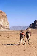 1046 Legs In The Desert (Hrvoje Simich - gaZZda) Tags: landscape sky animals camels desert mountains noperson outdoors blue yellow sand rocks wadirum jordan asia travel nikon nikond750 gazzda hrvojesimich