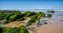 Colas de dragón. Cordoama. (Miguel Angel SGR) Tags: mar sea seascape seashore ocean algarve portugal playa beach color colorful nikon travel trips tour viajes viajar marina