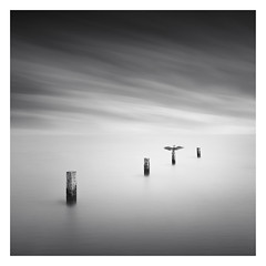 Out from the deep (Marco Maljaars) Tags: longexposure lee filter marcomaljaars seascape sea water lake le bw blackandwhite monochrome mood canon canon70d 70d ocean netherlands bird backlight sky silhouette reflection beach markermeer poles pole wood