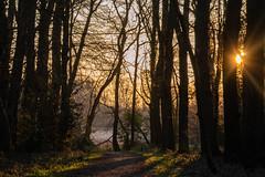 Sterrenbos, Roden, the Netherlands (Esther Blaauwwiekel) Tags: 2019 februari natuur nederland ochtend roden sterrenbos voorjaar winter zonsopgang zorro