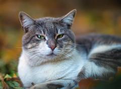 1-cat-NZ6_0033-LR6-md2 (John Igor) Tags: nikkor ais 85mm f14 cat