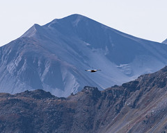 K1ST4682.jpg (macstenz) Tags: alpen frankreich motorrad hochgebirge strasen berge alps france motorbike highmountains roads mountains geier gänsegeier
