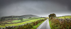 25th September 2019 (Rob Sutherland) Tags: lowick common road lane track single wall drystone stone wet field rural cows cattle livestock farm farming agriculture agricultural tree fell upland hill rain mist fog weather countryside country cumbria cumbrian ulverston lakes lakeland lakedistrict traditional tradition uk england english britain british landscape panorama panoramic autumn autumnal fall