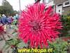 "2019-09-24   Zwijndrecht 26 Km (16) • <a style=""font-size:0.8em;"" href=""http://www.flickr.com/photos/118469228@N03/48795543947/"" target=""_blank"">View on Flickr</a>"