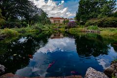 Philbrook Art Museum, Tulsa (Pejasar) Tags: philbrook artmuseum pond colorfulcarp fish water reflection blue artistic sky trees gardens backofphilbrook